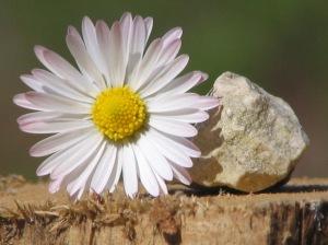 Tauschhandel: Blume gegen Steine