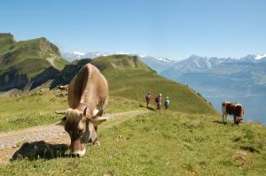 Das Läuten der Kuhglocken ist auch in den Höhen des Emmentaler Berglandes allgegenwärtig.