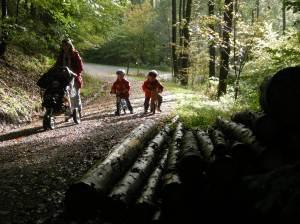 Unterwegs im Herbstwald Bilder: Anselm Bußhoff