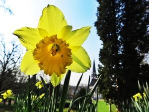 Frühlingserwachen in Emmendingen. Foto: Anselm Bußhoff