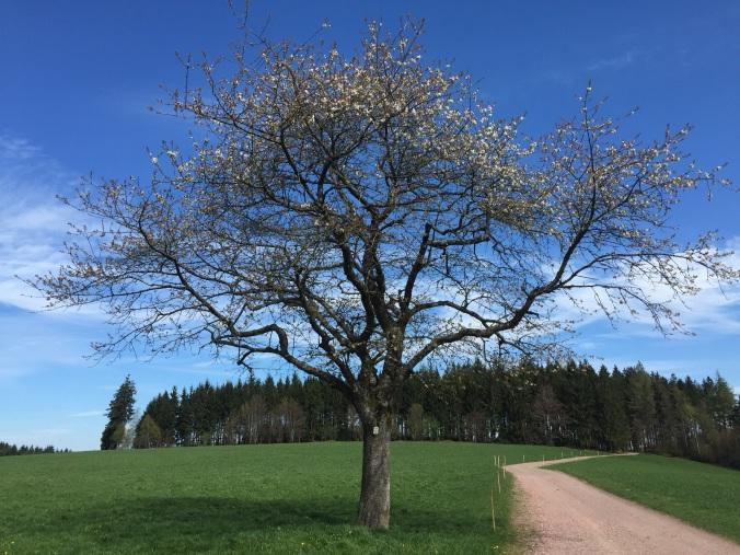 Der Frühling ist noch nicht recht angekommen. Die Bäume schlagen erst langsam aus.