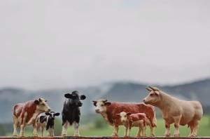 Urlaub für immer - unsere Kühe sind im französischen Jura geblieben.