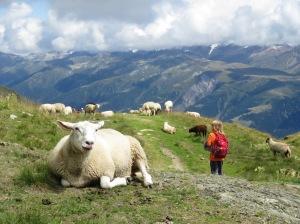 An Schafen vorbei Richtung Murmeltiere